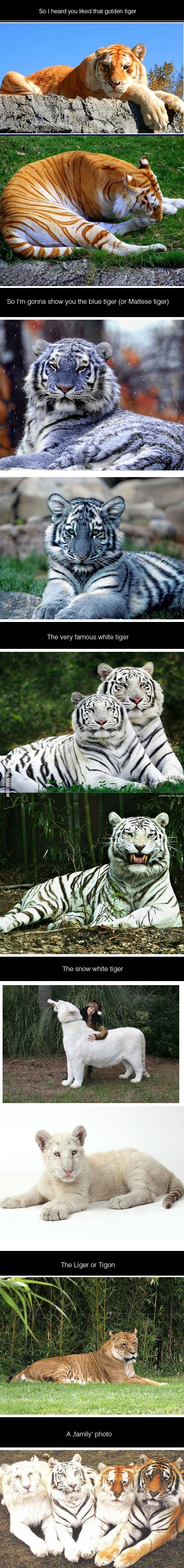 I heard you like Tigers