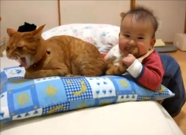 Kids trying to eat their pets 12