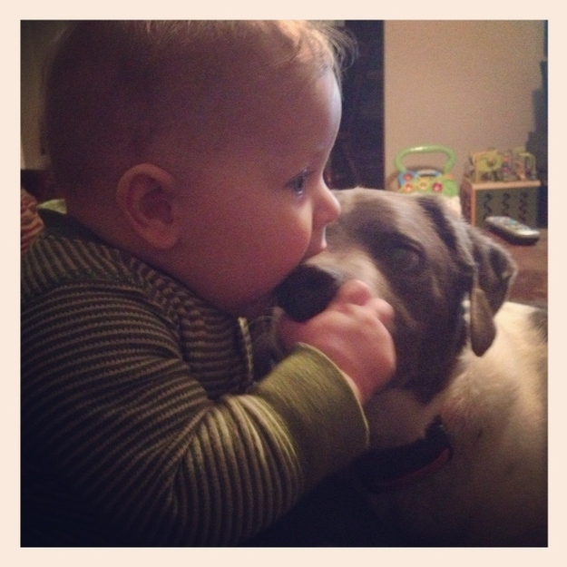 Kids trying to eat their pets 3