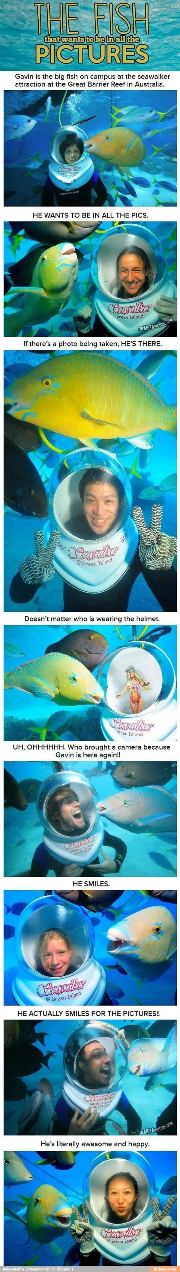 Meet Gavin the Fish!