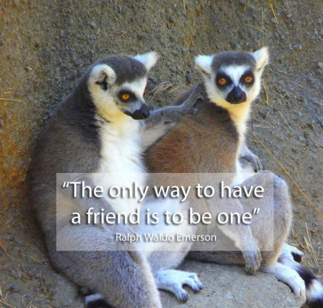 Friendship Quotes By Celebrities : Quotes on friendship said by famous people