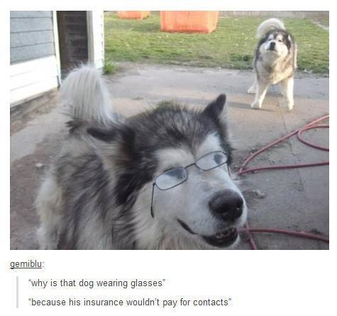 Why is that dog wearing glasses?