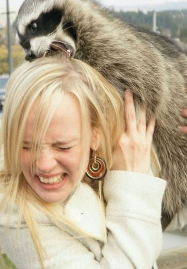 Women vs. Animals 3