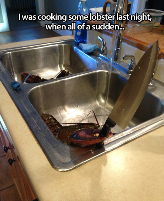 Cooking lobster when suddenly…
