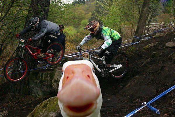 Funny Animal Photobombs — 10