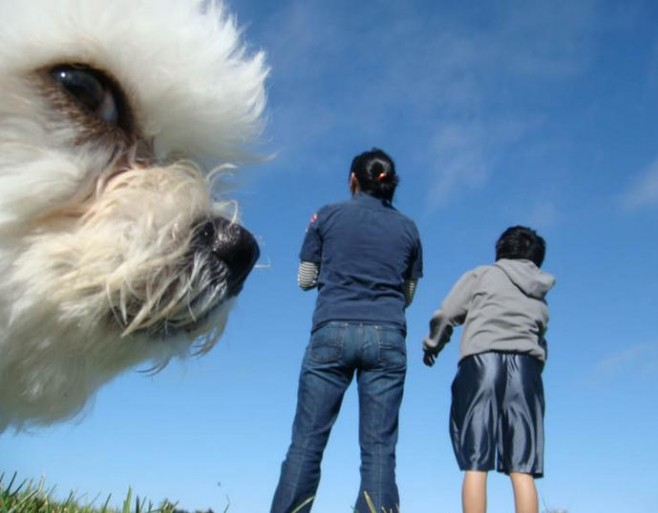 Funny Animal Photobombs — 15