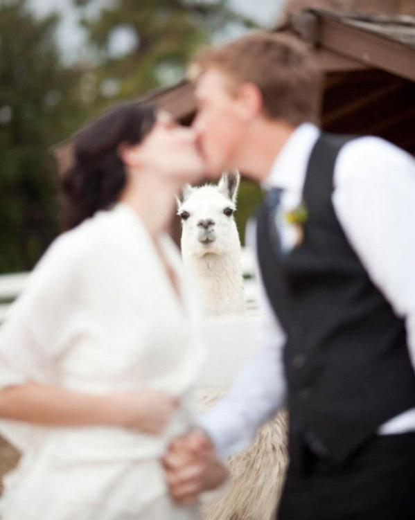 Funny Animal Photobombs — 17