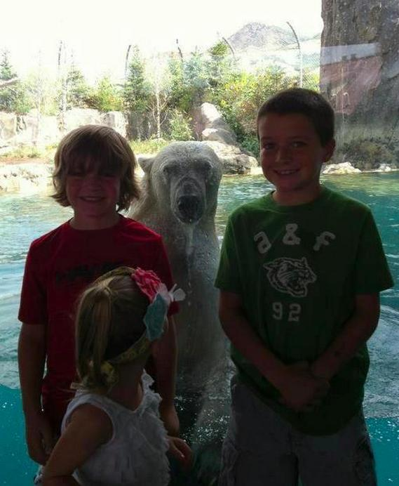 Funny Animal Photobombs — 18