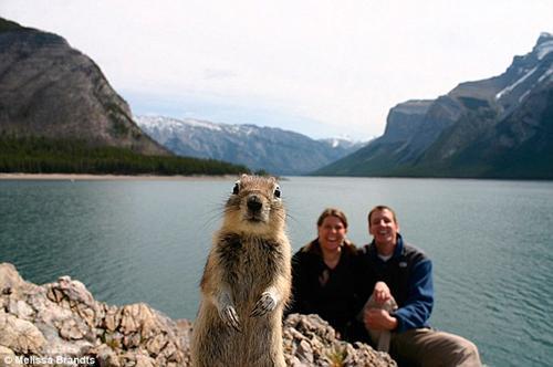 Funny Animal Photobombs — 2