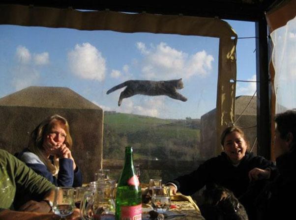Funny Animal Photobombs — 20