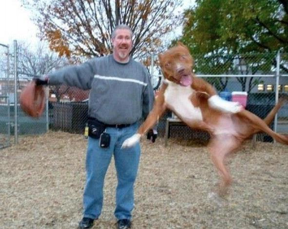 Funny Animal Photobombs — 21