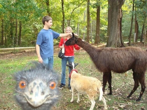 Funny Animal Photobombs — 23