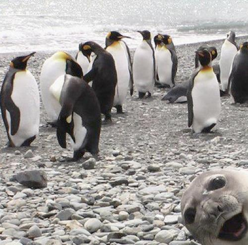 Funny Animal Photobombs — 26