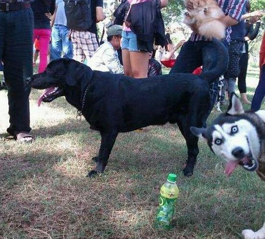 Funny Animal Photobombs — 3