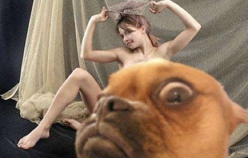 Funny Animal Photobombs — 6