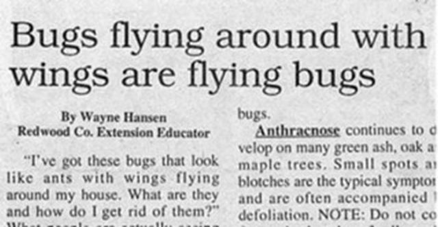 Funny and Weird Stuff Written in Newspapers 27
