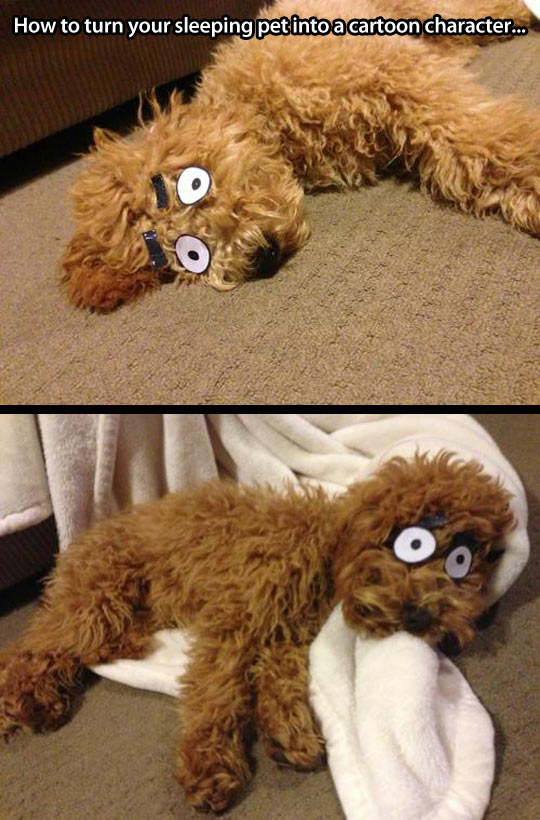 How to turn your sleeping pet into a cartoon character...