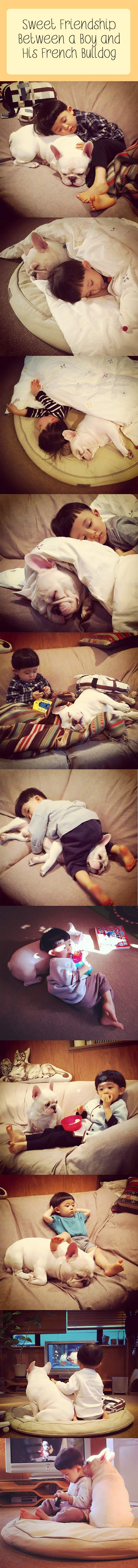 Sweet friendship between a boy and his french bulldog.