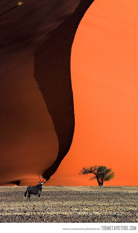 Oryx at the base of a sand dune…