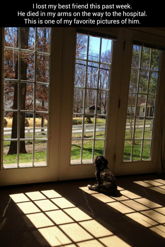 cute-best-friend-dog-window-hospital