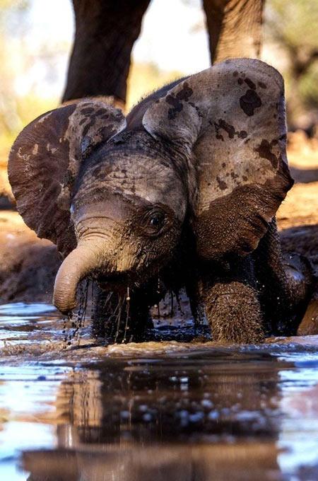 cute-elephant-mud-bath