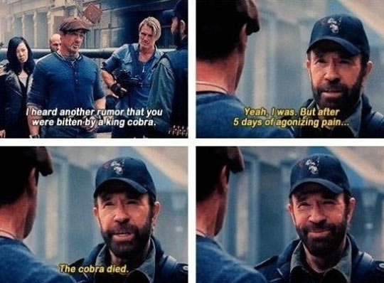 funny-Chuck-Norris-Expendables-king-cobra
