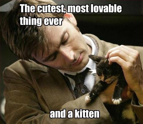 funny-Dr-Who-cat-lovable-thing