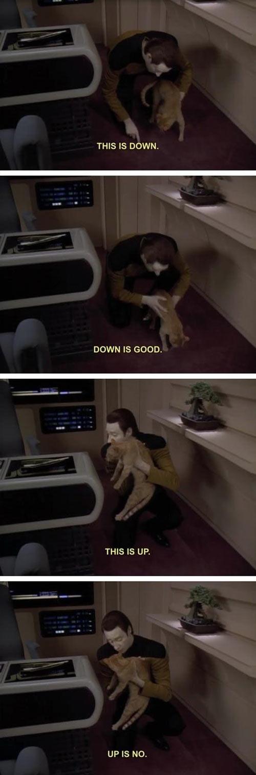 funny-Star-Trek-cat-down-up