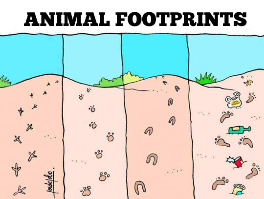 Types of animal footprints…