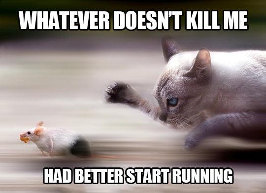 funny-better-start-running