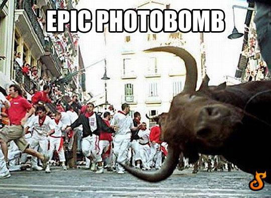 funny-bull-photobomb-Spain-people