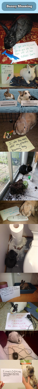 Bunny Shaming…