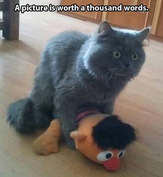 funny-cat-Ernie-Muppet-together