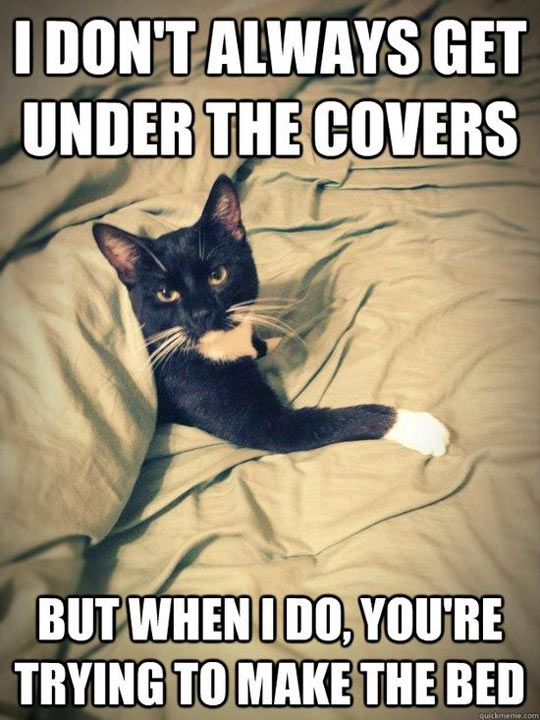funny-cat-bed-under-covers-make