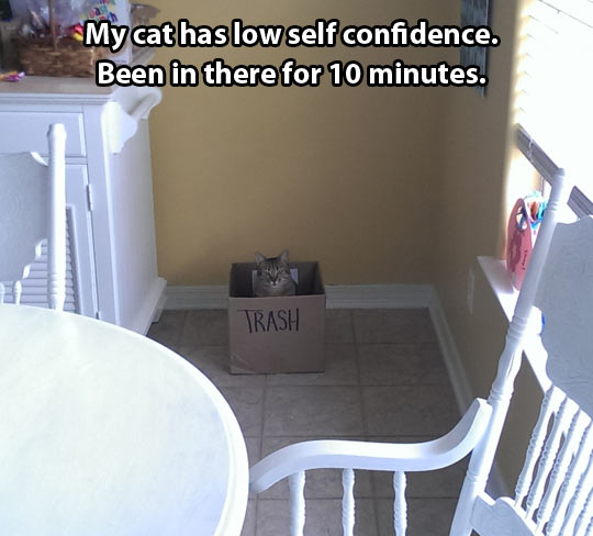 Cat with low self confidence…