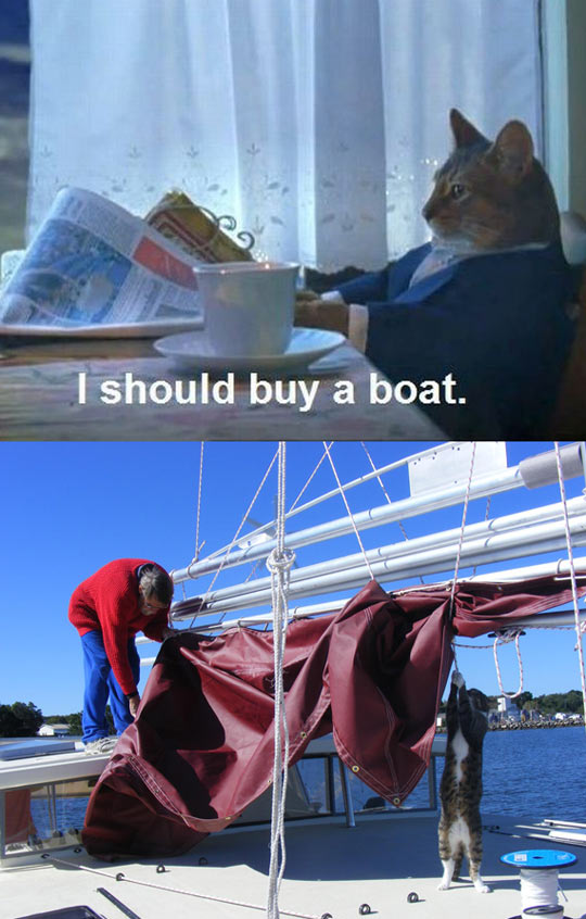 funny-cat-buy-boat-help