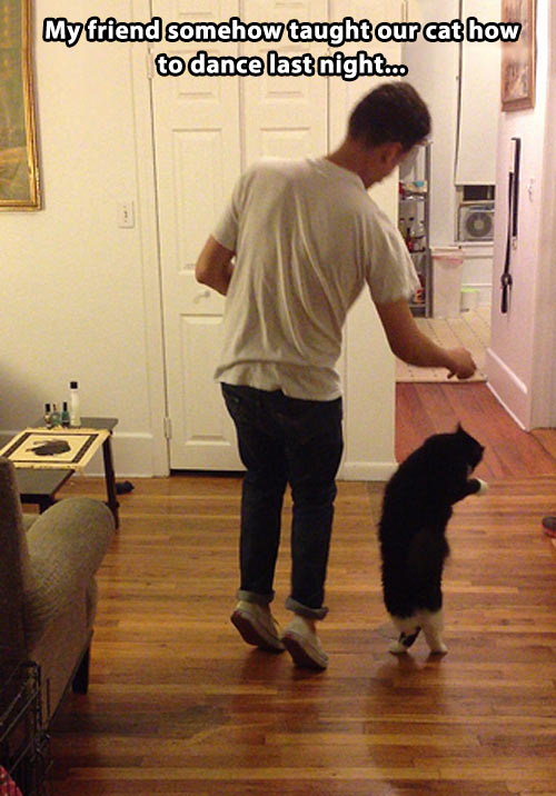 Dancing with the cat…