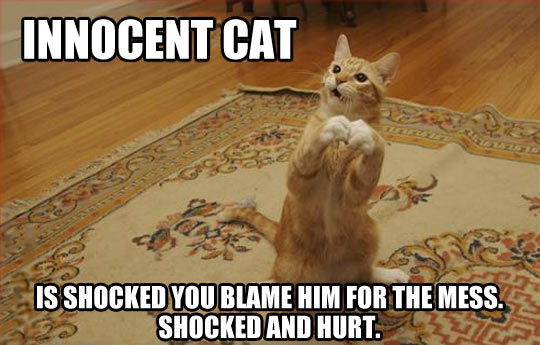 funny-cat-innocent-mess-rug