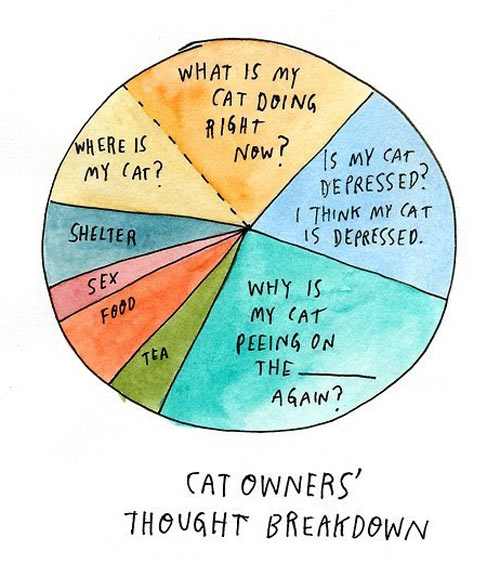 Cat owners' thought breakdown…