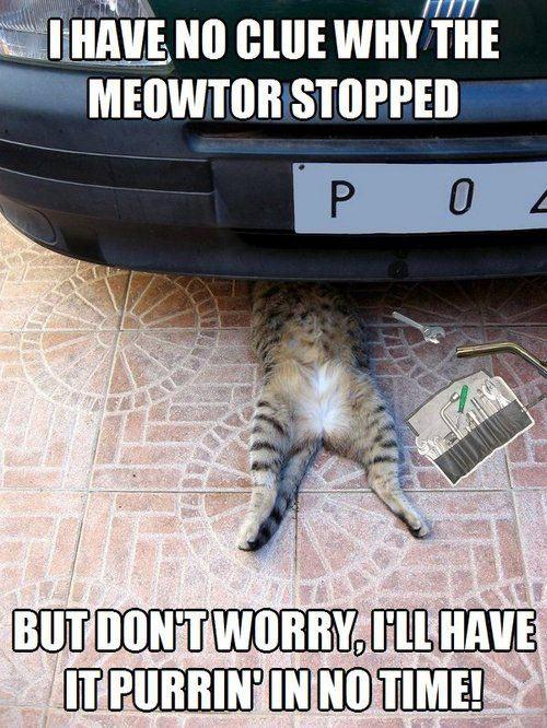 Auto repair cat…