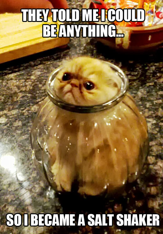 Condiment cat…