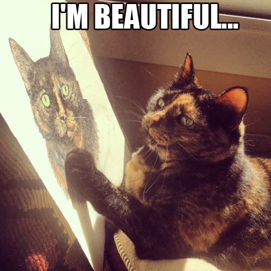 funny-cat-watching-painting-beautiful