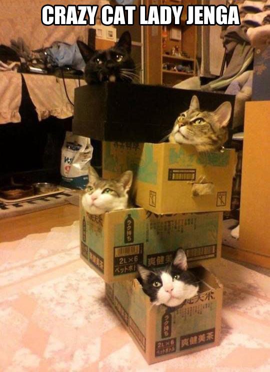 Crazy cat lady Jenga…