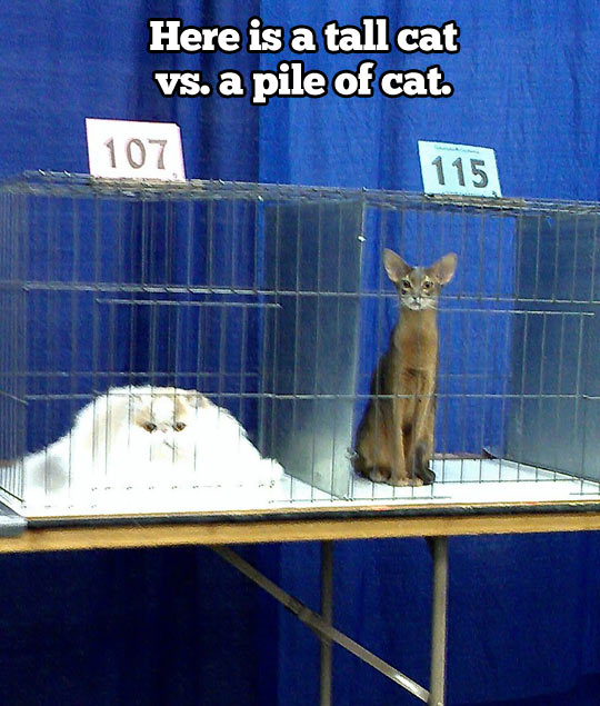 Tall cat vs. pile of cat…