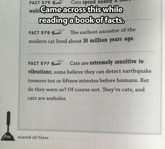 That's just how cats are…