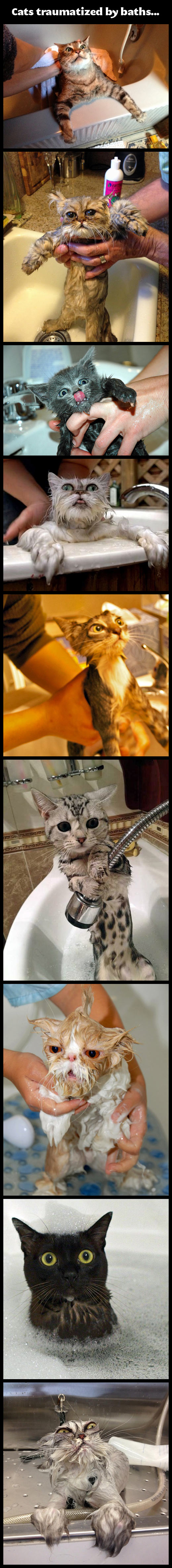 Cats traumatized by baths…
