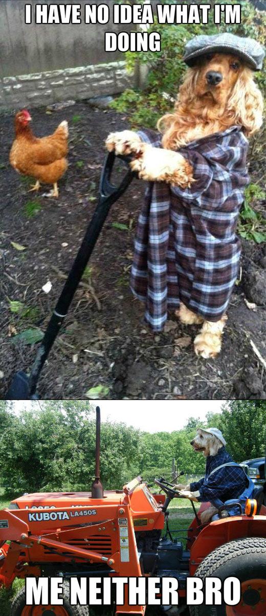 funny-dog-farmer-clothes