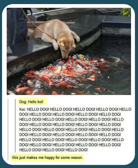 Hello koi for Is fish bad for dogs