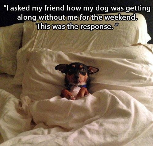 funny-dog-friend-alone-bed-sleeping-weekend