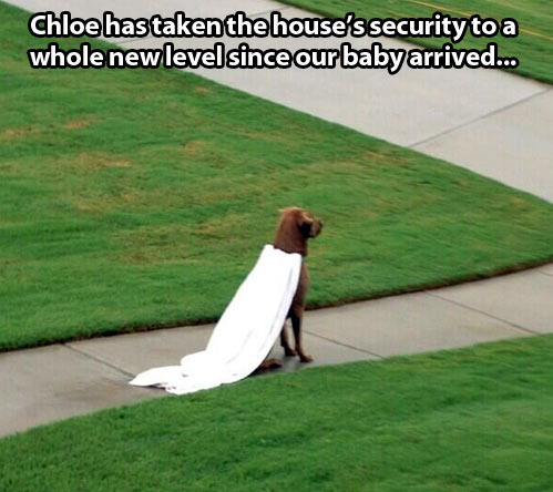 Security taken to a whole new level…